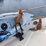 Cats like the kayaks