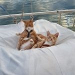 Happy cats relaxing on the tender cover