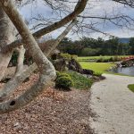 Glimpse of Japanese garden