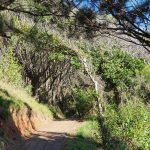 Walking track to Boambee Lookout