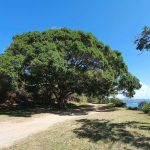 Walking track to Alma Doepel Reserve