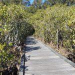 Boardwalk near the creek