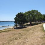 Lovely trees on the foreshore