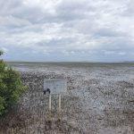 Moreton Bay on low tide