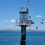 Channel marker - we scared the birds off