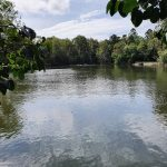 Lake in the Botanic Gardens