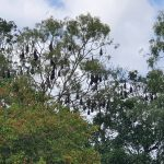 Bats nesting near a park.