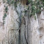 The roots go deep into the caves