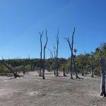 Chinaman Creek Wetlands (dry)