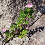 Flowers growing out of the rocks