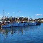 Fishing fleet near the fishing co-op