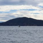 More boat traffic - probably going whale watching