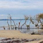 11 July Mambo Wetlands Reserve