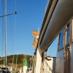 Cats are free to roam the boat