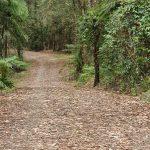 Walking track at Bongil picnic area