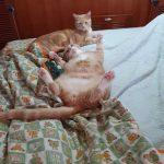 Cats20200919_070532