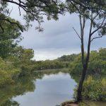 Lota Creek