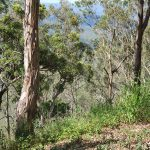 Picnic Point Lookout