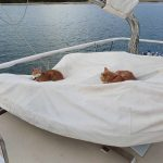 Cats chilling on the tender