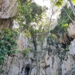Tree routes can help keep the caves stable
