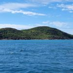 Shaw Island (spot the dolphin)