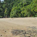 Another Monitor lizard on Dugong beach