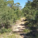 The track to Bustard Head light
