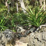 Island flora